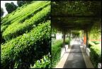 Hanging garden & maze garden