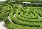 Maze garden on the recreation level